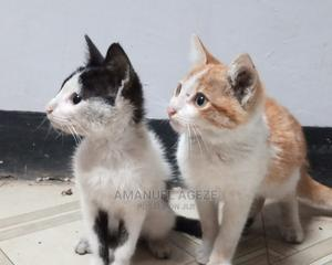 1-3 Month Female Mixed Breed Cat | Cats & Kittens for sale in SNNPR, Gamo